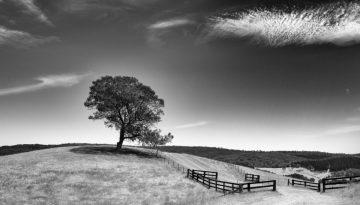 Thomas Kane Photography - Hereford Stud- Yarck Australia