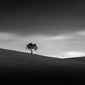 TKP-Tree Yarra Valley Victoria